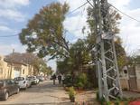 עצים מסוכנים ברחבי באר שבע