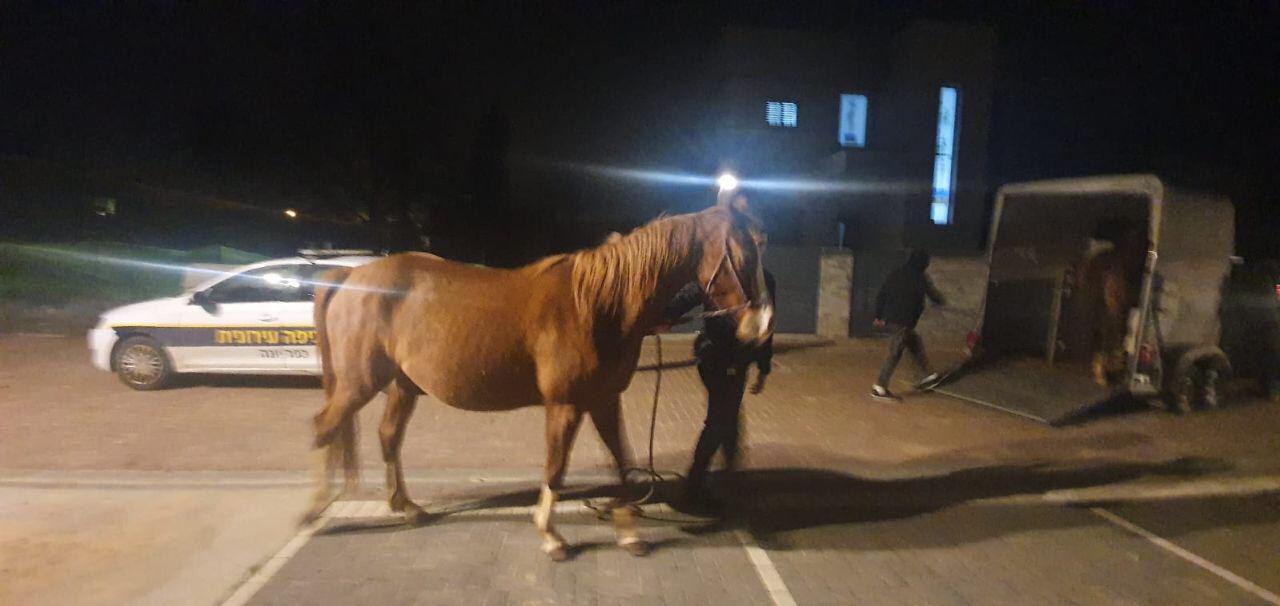 הסוס הגנוב אותר בכפר יונה