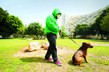 טיול עם הכלב בימי קורונה