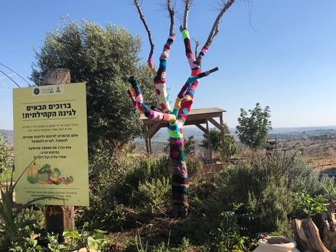 עץ הזית הסרוג