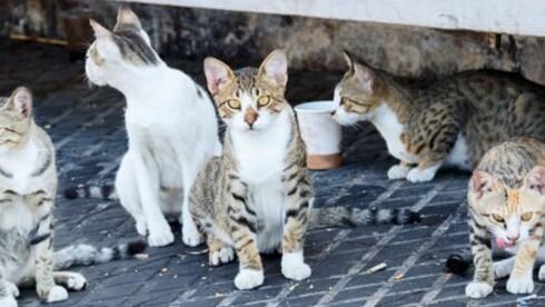 יוותרו על התביעה אם תפסיק להאכיל חתולים