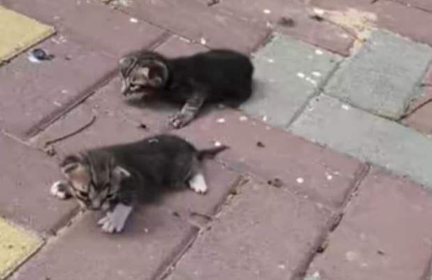 חתולים מוזנחים בראש העין