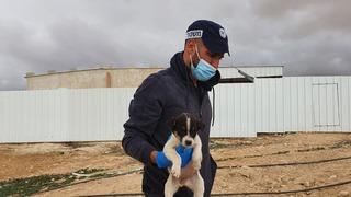 חילוץ הכלבים