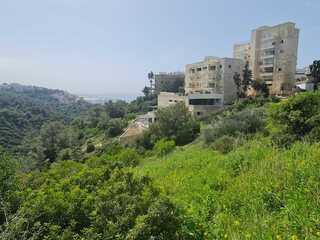 """פרויקט הנדל""""ן בחיפה, שכונת כרמליה"""