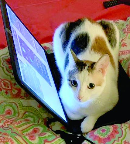חתול בעבודה