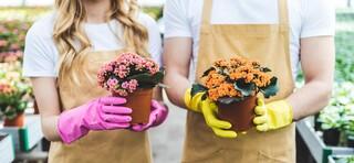 טיפול בצמחים ופרחים