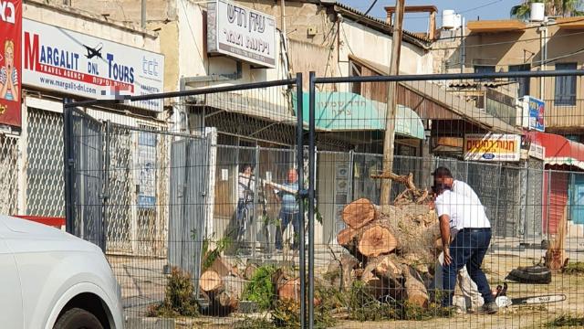 """עצים שנגדעו בשדרות קק""""ל באר שבע"""