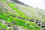 הגבעות הדרומיות | צילום: דקלה בן יעקב